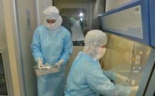Scoperto il virus che ha generato il Covid-19: è nato in Cina e circolava a ottobre 2019
