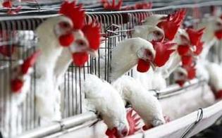 http://www.seguonews.it/litalia-potrebbe-essere-a-rischio-di-influenza-aviaria-proveniente-da-galline-e-tacchini-necessario-prendere-precauzioni