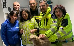https://www.seguonews.it/caltanissetta-scoppia-incendio-in-via-romita-due-cani-salvati-da-118-e-vigili-del-fuoco