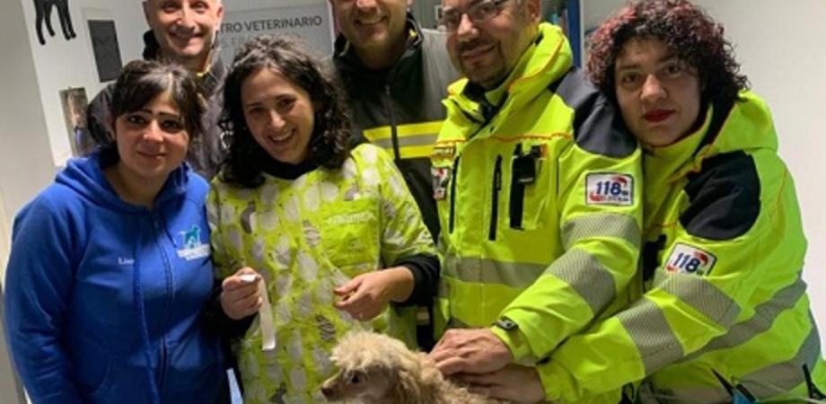 Caltanissetta. Scoppia incendio in via Romita: due cani salvati da 118 e vigili del fuoco