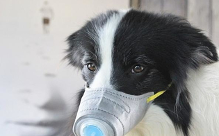 http://www.seguonews.it/psicosi-da-coronavirus-in-cina-maschere-anche-per-gli-animali-le-foto-di-animali-domestici-con-la-mascherina-sono-diventate-virali