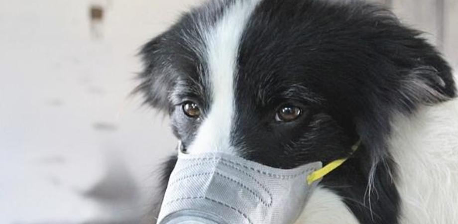 Psicosi da coronavirus, in Cina maschere anche per gli animali. Le foto stanno diventando virali