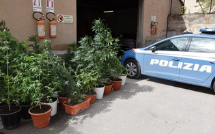 https://www.seguonews.it/niscemi-serra-indoor-di-marijuana-allestita-in-un-garage-arresti-domiciliari-per-un-36enne