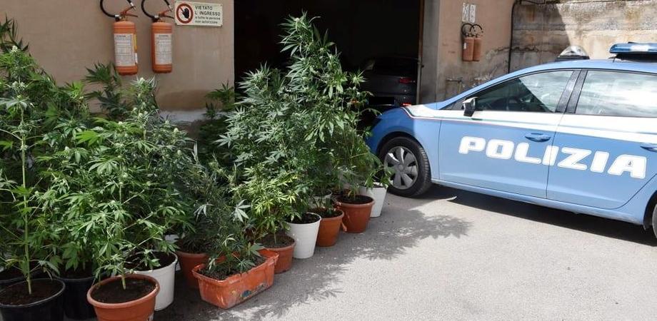 Niscemi, serra indoor di marijuana allestita in un garage: arresti domiciliari per un 36enne