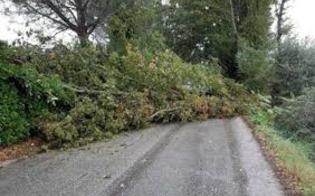 Maltempo, albero sulla carreggiata: traffico bloccato sulla strada tra Sommatino e Campobello