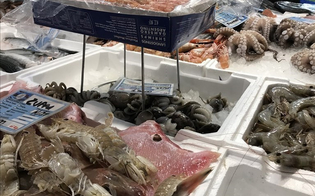 http://www.seguonews.it/il-pesce-pescato-illegalmente-e-sequestrato-verra-distribuito-agli-enti-caritatevoli-in-sicilia-un-progetto-unico-in-europa
