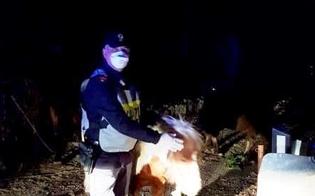 https://www.seguonews.it/caltanissetta-due-pony-e-un-cavallo-al-galoppo-vicino-al-dubini-interviene-la-polizia