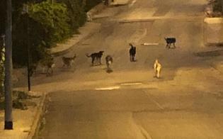 http://www.seguonews.it/caltanissetta-cani-randagi-nel-quartiere-balate-cittadini-protestano-impossibile-correre-o-camminare