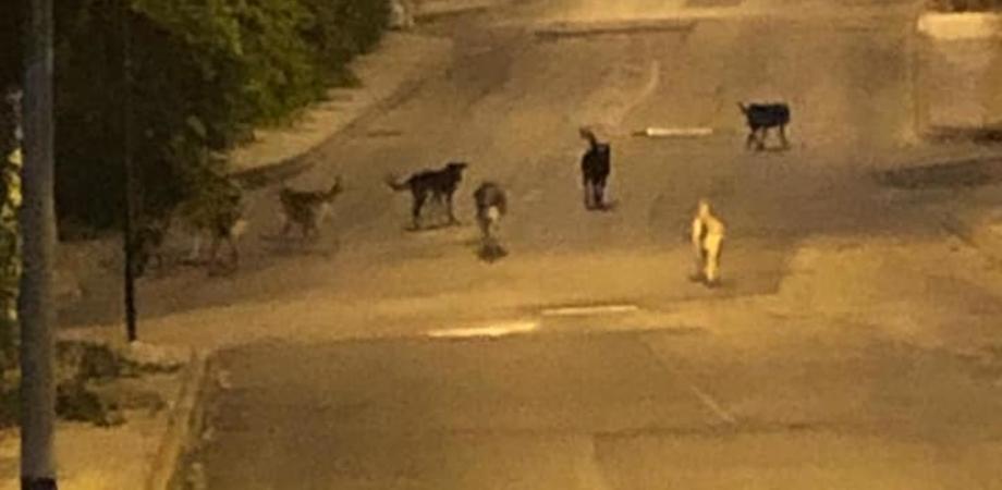 """Caltanissetta. Cani randagi nel quartiere Balate, cittadini protestano: """"Impossibile correre o camminare"""""""