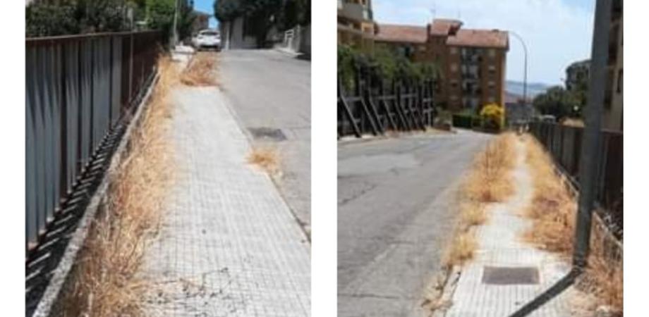 """Caltanissetta, un lettore segnala: """"Erbacce sui marciapiedi rendono impossibile il passaggio di pedoni e animali d'affezione"""""""