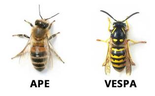 Api e vespe: come distinguere le punture, prevenirle e trattarle