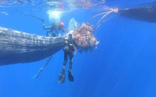 https://www.seguonews.it/capodoglio-intrappolato-in-una-rete-da-pesca-illegale-salvato-al-largo-di-lipari