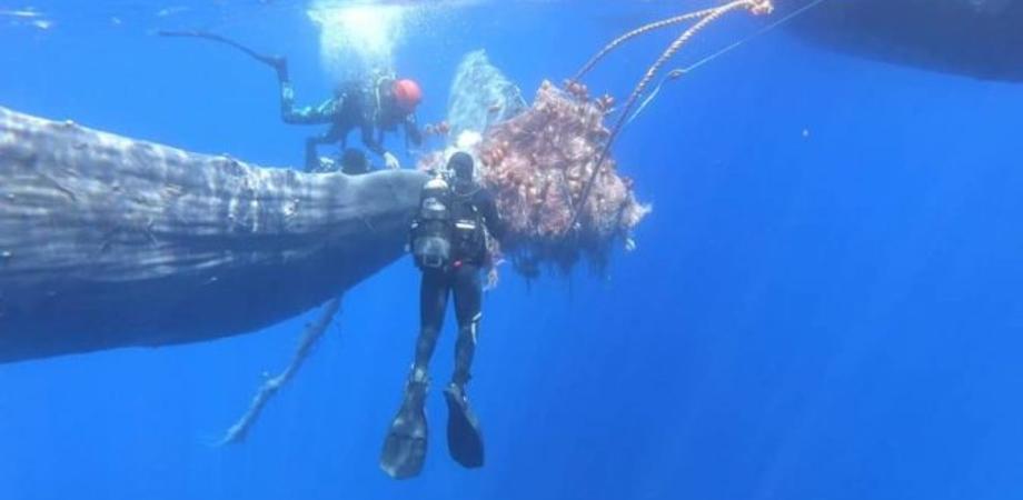 Capodoglio intrappolato in una rete da pesca illegale salvato al largo di Lipari