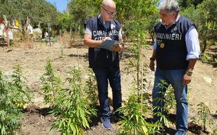 https://www.seguonews.it/mussomeli-45enne-dedito-allallevamento-di-rapaci-coltivava-anche-marijuana-arrestato