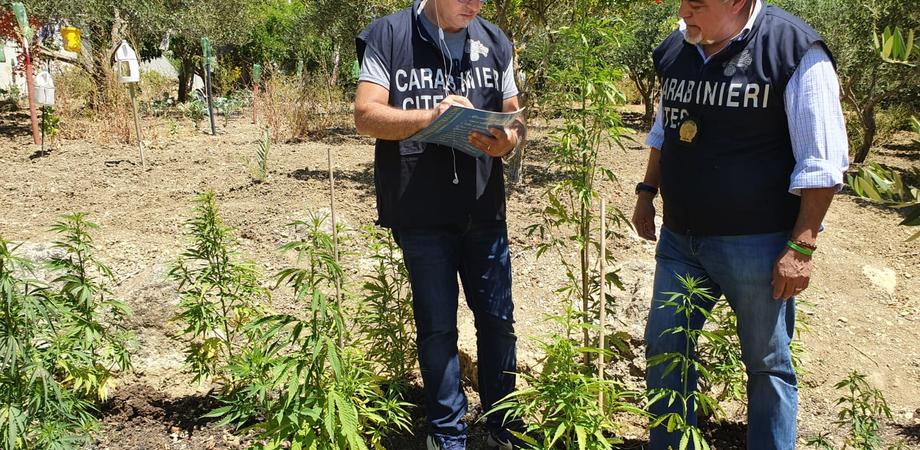 Mussomeli, 45enne dedito all'allevamento di rapaci coltivava anche marijuana: arrestato