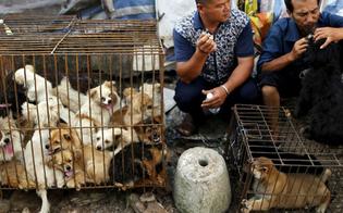 http://www.seguonews.it/al-via-in-cina-il-festival-di-yulin-migliaia-di-cani-e-gatti-torturati-e-uccisi