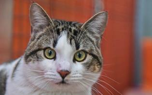 http://www.seguonews.it/gatto-con-virus-raro-morde-la-padrona-avviate-indagini-dal-ministero-della-salute
