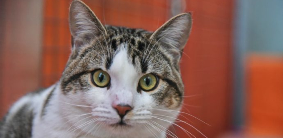 """""""No a troppi gatti in casa se pericolosi per i vicini"""": il Tar dà ragione a un condominio di Catania"""