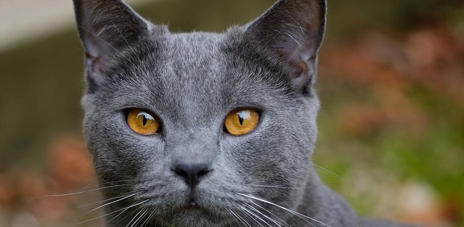 Il gatto contagiato da Lyssavirus ha morso quattro persone: sindaco di Arezzo emana due ordinanze