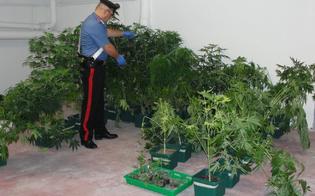https://www.seguonews.it/delia-creano-serre-per-la-coltivare-marijuana-nella-casa-di-campagna-due-fratelli-arrestati