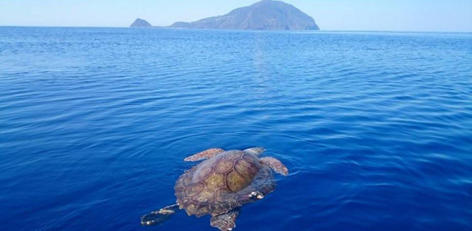 Il mare delle Eolie continua a dare spettacolo con delfini, capodogli e tartarughe