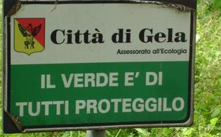 http://www.seguonews.it/adozione-delle-aree-verdi-il-comune-di-gela-lancia-un-appello-commercianti-e-imprese-si-facciano-avanti