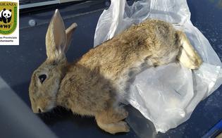 http://www.seguonews.it/emergenza-bracconaggio-nella-piana-di-gela-gli-ambientalisti-animali-uccisi-durante-la-notte