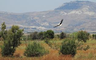 http://www.seguonews.it/piana-di-gela-liberata-una-cicogna-bianca-ricoverata-al-centro-recupero-fauna-selvatica-di-messina