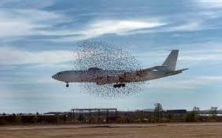 Paura su un volo Volotea durante il decollo a Pantelleria: aereo si scontra con uno stormo di uccelli