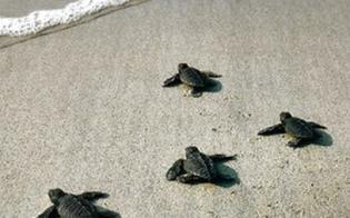 https://www.seguonews.it/lampedusa-tartaruga-caretta-caretta-deposita-le-uova-alla-guitgia-sotto-gli-occhi-dei-turisti