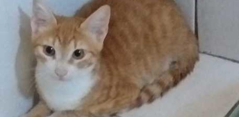 Migrante sbarca a Lampedusa con un gatto: Pupi sarà in quarantena per sei mesi