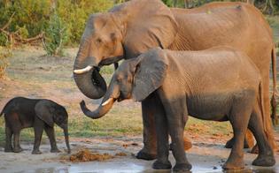 http://www.seguonews.it/morti-oltre-350-elefanti-nel-bostwana-si-indaga-sulle-cause-disastro-ambientale