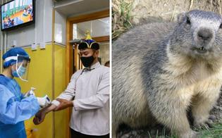 http://www.seguonews.it/in-mongolia-2-casi-di-peste-il-contagio-associato-al-consumo-di-carne-di-marmotta