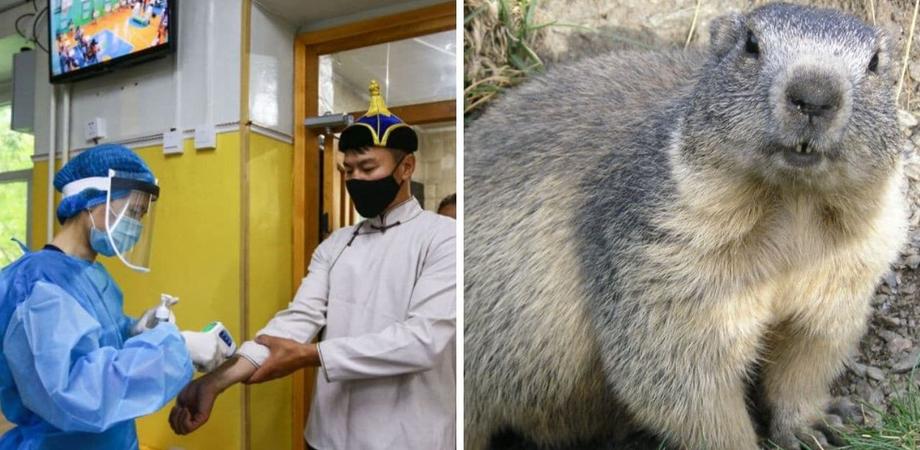In Mongolia 2 casi di peste: il contagio associato al consumo di carne di marmotta