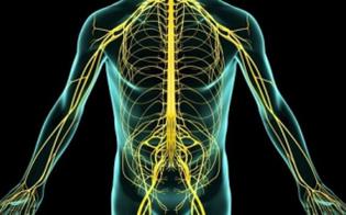 http://www.seguonews.it/il-coronavirus-non-colpisce-solo-i-polmoni-danni-anche-al-sistema-nervoso
