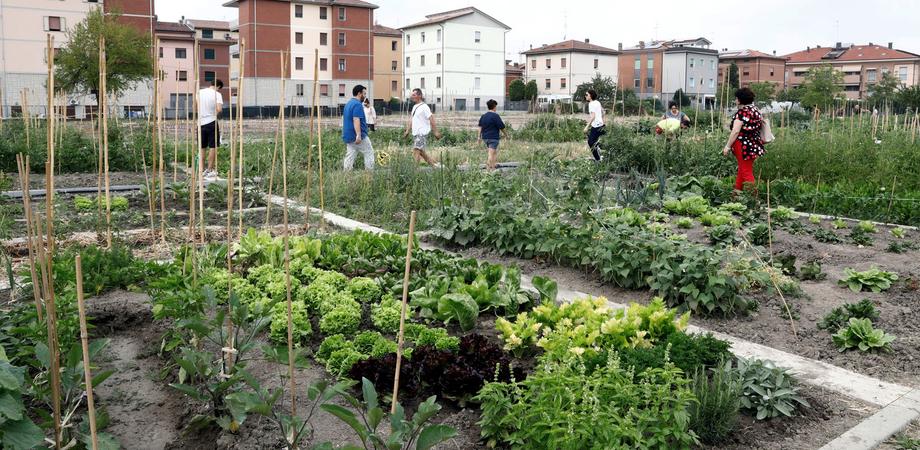 """Leandro Janni, Italia Nostra: """"A Caltanissetta gli orti urbani per incentivare l'amore per la natura"""""""