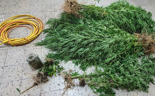 https://www.seguonews.it/a-piazza-armerina-rinvenuta-una-piantagione-di-marijuana-arrestato-un-67enne