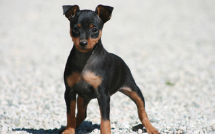 http://www.seguonews.it/caltanissetta-morto-il-cane-abbandonato-nel-balcone-dai-proprietari-dopo-una-lite