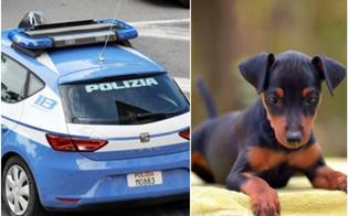 http://www.seguonews.it/caltanissetta-denunciati-i-proprietari-del-cagnolino-morto-dopo-essere-stato-chiuso-in-balcone