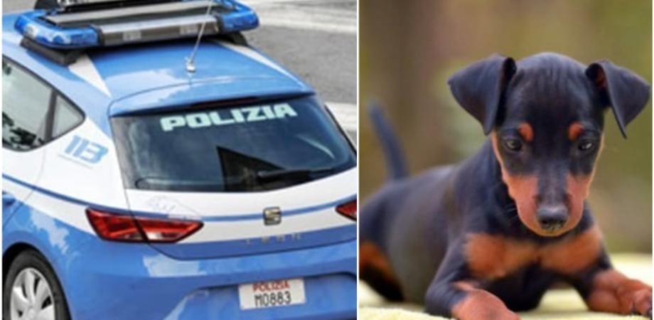 Caltanissetta, denunciati i proprietari del cagnolino morto dopo essere stato chiuso in balcone