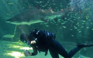 http://www.seguonews.it/nel-trapanese-sub-circondato-da-squali-mentre-fa-pesca-subacquea-esperienza-traumatica