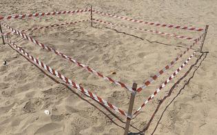 https://www.seguonews.it/spiaggia-di-falconara-rinvenuto-un-nido-di-tartarughe-caretta-caretta-area-messa-subito-in-sicurezza