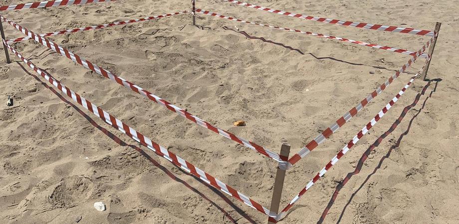 """Spiaggia di Falconara, rinvenuto un nido di tartaruga """"Caretta caretta"""": area messa subito in sicurezza"""