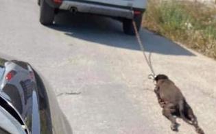 http://www.seguonews.it/lega-un-cane-allauto-e-lo-trascina-luomo-bloccato-dalle-urla-di-una-donna-che-ha-assistito-alla-scena
