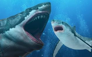 https://www.seguonews.it/avvistato-nel-mare-trapanese-un-branco-di-squali-la-capitaneria-di-porto-massima-prudenza-fate-attenzione