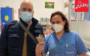 https://www.seguonews.it/caltanissetta-salvato-dai-volontari-della-lipu-uno-sparviere-era-ferito-perche-colpito-da-una-fucilata
