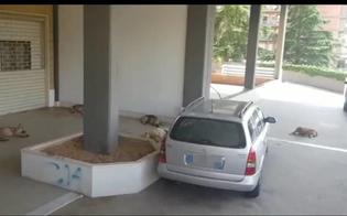 http://www.seguonews.it/caltanissetta-branco-di-cani-randagi-staziona-in-via-degli-orti-i-residenti-siamo-stanchi-adesso-basta