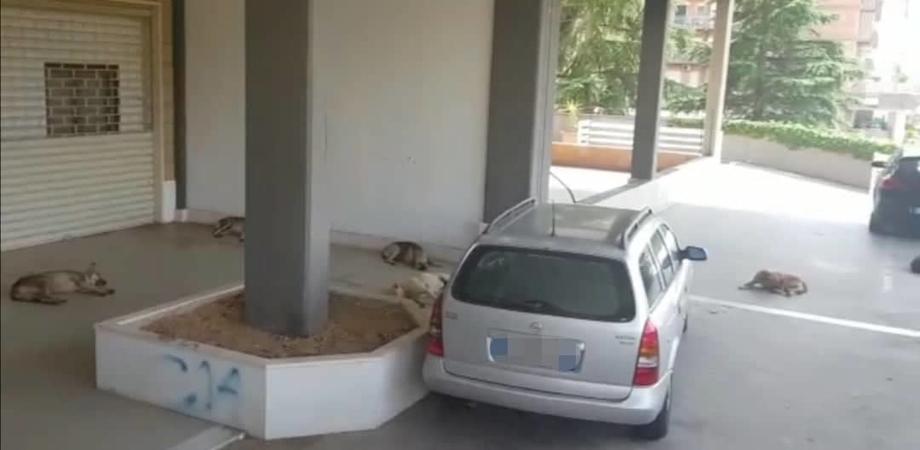 """Caltanissetta. Branco di cani randagi staziona in via degli Orti, i residenti: """"Siamo stanchi adesso basta"""""""