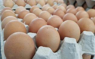 https://www.seguonews.it/data-di-scadenza-falsificata-sequestrate-cinquemila-uova-nel-ragusano