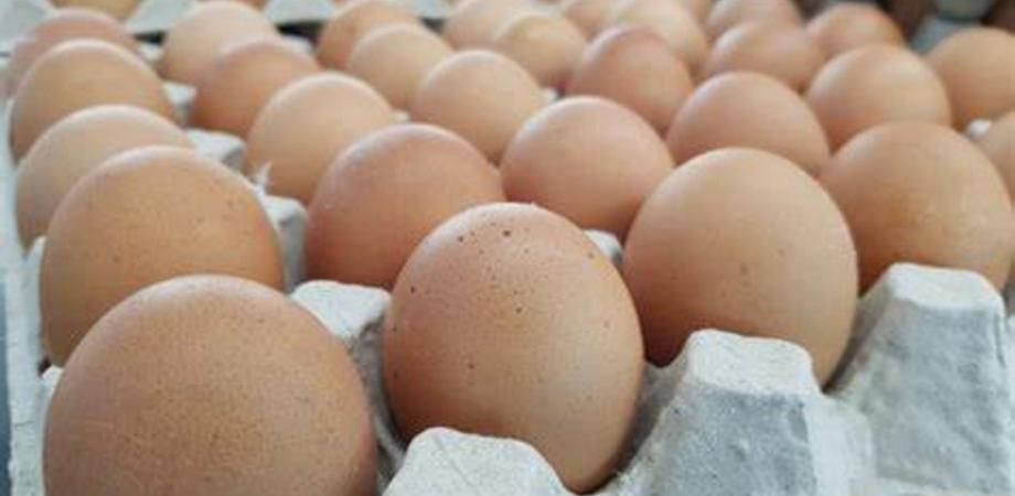 Data di scadenza falsificata: sequestrate cinquemila uova nel Ragusano